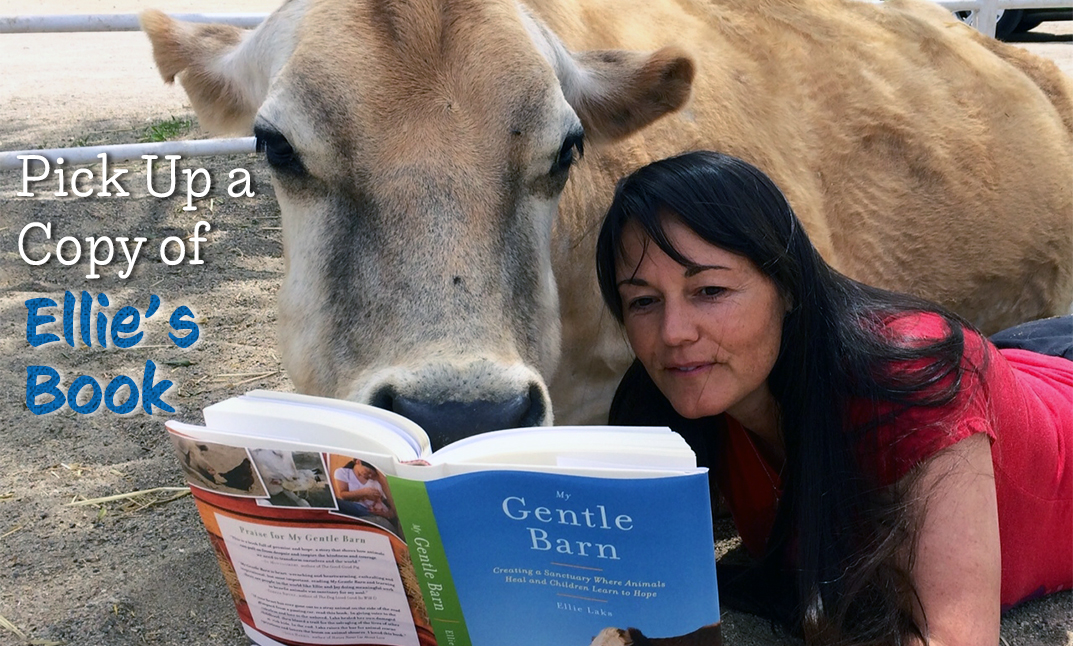 Pick up a copy of Ellie's book!  (Image of Ellie reading to Buttercup the cow.)